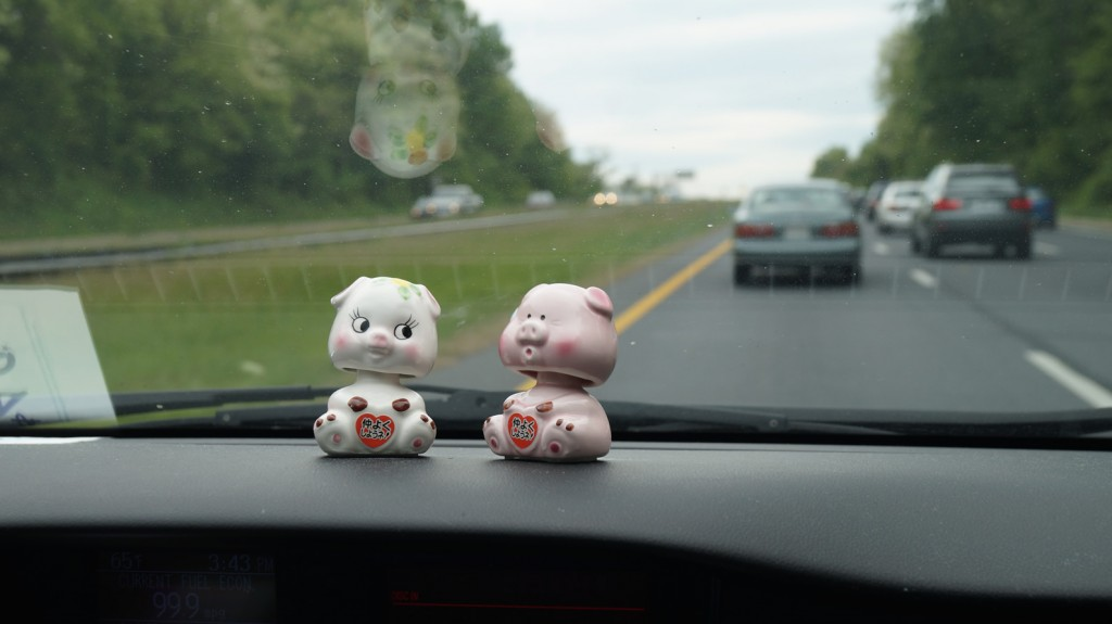 Pigs on Car